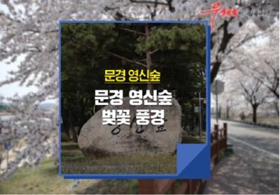 [e기자] 문경 영신숲에서 벚꽃과 함께 봄을 즐기다!